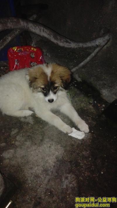 【南通捡到狗】,这只小狗在我们店后面谁来带走吧,好可怜,它是一只非常可爱的宠物狗狗,希望它早日回家,不要变成流浪狗。