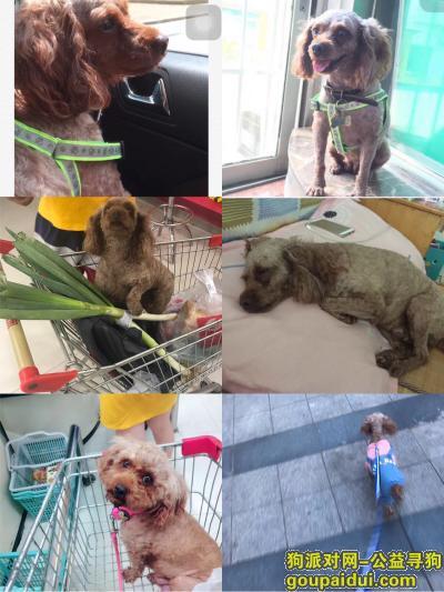 新余寻狗启示,狗狗回家吧,希望好心人看到请联系18224694867微信同号,它是一只非常可爱的宠物狗狗,希望它早日回家,不要变成流浪狗。