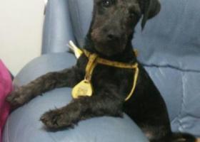 求好心人寻找爱狗带着黄色的项圈