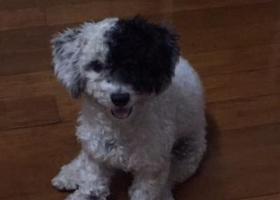 寻狗启示,寻找宁波北仑小狗走失,它是一只非常可爱的宠物狗狗,希望它早日回家,不要变成流浪狗。
