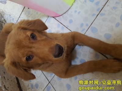 宜宾寻狗启示,妞妞宝贝 快回家 好不好 我好想你!!,它是一只非常可爱的宠物狗狗,希望它早日回家,不要变成流浪狗。
