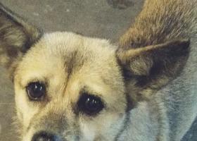 寻狗启示,本人于2017年9月28号下午丢失了一条狗,它是一只非常可爱的宠物狗狗,希望它早日回家,不要变成流浪狗。