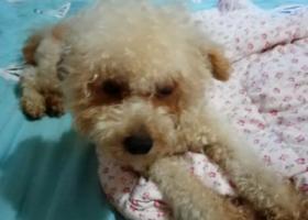 寻狗启示,横山桥国瑞宾馆附近的能麻烦留意一下吗?,它是一只非常可爱的宠物狗狗,希望它早日回家,不要变成流浪狗。