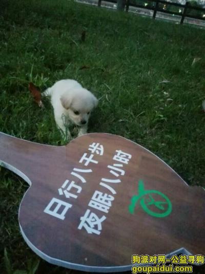 丽水寻狗网,小奶糖,4个月大了,10月1号傍晚4.5点左右走丢了,我已经找了两天两夜了,如果看见了请联系本人788581(18057888710)    谢谢了!我真的很担心狗狗,它是一只非常可爱的宠物狗狗,希望它早日回家,不要变成流浪狗。