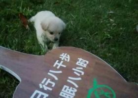 寻狗启示,小奶糖,4个月大了,10月1号傍晚4.5点左右走丢了,我已经找了两天两夜了,如果看见了请联系本人788581(18057888710)    谢谢了!我真的很担心狗狗,它是一只非常可爱的宠物狗狗,希望它早日回家,不要变成流浪狗。