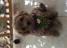 寻狗启示,本人因不慎在9月28日晚,丢失小狗狗一条,它是一只非常可爱的宠物狗狗,希望它早日回家,不要变成流浪狗。