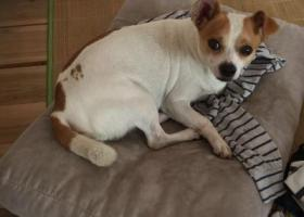 寻狗启示,顺德大良桂畔花园一带走失爱犬,它是一只非常可爱的宠物狗狗,希望它早日回家,不要变成流浪狗。