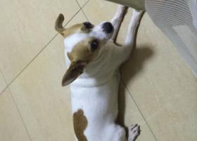 寻狗启示,寻找爱犬,望早日回家相聚,它是一只非常可爱的宠物狗狗,希望它早日回家,不要变成流浪狗。