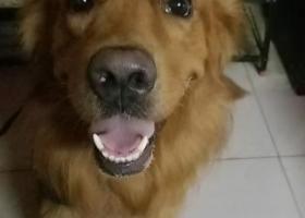 寻狗启示,路虎,你在哪,我们再找你,它是一只非常可爱的宠物狗狗,希望它早日回家,不要变成流浪狗。