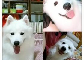 寻狗启示,寻狗,谢谢各位!(阜阳临泉城关镇),它是一只非常可爱的宠物狗狗,希望它早日回家,不要变成流浪狗。