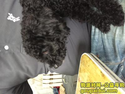 长春寻狗主人,2017.10.8日下午,于二道区自由大路深圳街交汇捡到一只黑色母泰迪,体长50公分。,它是一只非常可爱的宠物狗狗,希望它早日回家,不要变成流浪狗。
