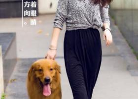 寻狗启示,10月8号晚上9点20金坛社头镇金毛丢失急电,它是一只非常可爱的宠物狗狗,希望它早日回家,不要变成流浪狗。