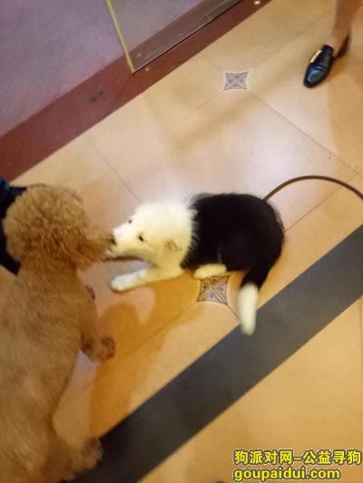 寻狗启示,宝贝,你去哪了?找狗,它是一只非常可爱的宠物狗狗,希望它早日回家,不要变成流浪狗。