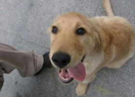 寻狗启示,急!急!   重金寻狗!!!,它是一只非常可爱的宠物狗狗,希望它早日回家,不要变成流浪狗。