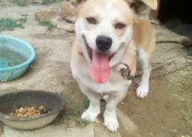 寻狗启示,托县电厂丢失一条黄色小狗,它是一只非常可爱的宠物狗狗,希望它早日回家,不要变成流浪狗。