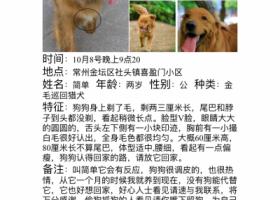 寻狗启示,寻狗启示简单,平安归来。,它是一只非常可爱的宠物狗狗,希望它早日回家,不要变成流浪狗。