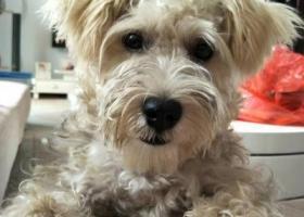 寻狗启示,家狗丢失,疑被坏人拐走,它是一只非常可爱的宠物狗狗,希望它早日回家,不要变成流浪狗。