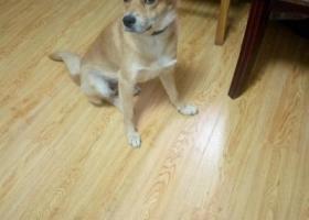 寻狗启示,旺财快回家吧!麻麻非常想念你!快归来吧。好心人有消息请联系13917546332,它是一只非常可爱的宠物狗狗,希望它早日回家,不要变成流浪狗。