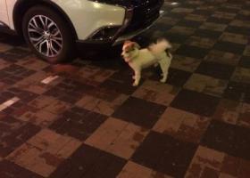 寻狗启示,狗主人快快领走他  河北区狮子林大街,它是一只非常可爱的宠物狗狗,希望它早日回家,不要变成流浪狗。
