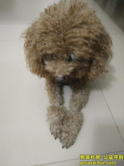 ,本人于10月19日下午在惠城区江北新寮村篮球场附近捡到一只泰迪犬,它是一只非常可爱的宠物狗狗,希望它早日回家,不要变成流浪狗。
