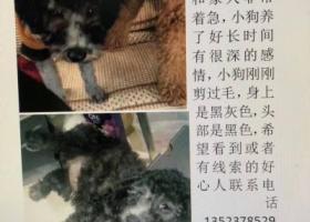寻狗启示,蓝贵宾丢失,3个月大,求求您帮帮忙,家人已找疯,它是一只非常可爱的宠物狗狗,希望它早日回家,不要变成流浪狗。