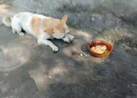 寻狗启示,犬丢了,帮忙找找,急~,它是一只非常可爱的宠物狗狗,希望它早日回家,不要变成流浪狗。