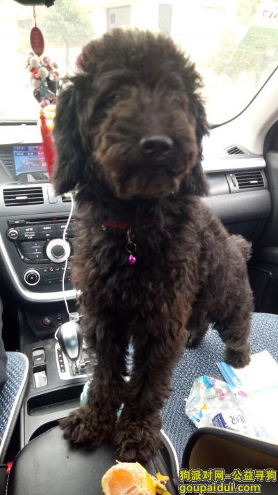 娄底寻狗网,2017年10月22日娄底五江碧桂园捡到黑色泰迪一只,希望能早日找到主人,它是一只非常可爱的宠物狗狗,希望它早日回家,不要变成流浪狗。
