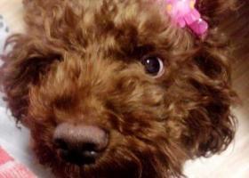 寻狗启示,家人焦急寻找狗狗,希望能够得到回音!!!,它是一只非常可爱的宠物狗狗,希望它早日回家,不要变成流浪狗。