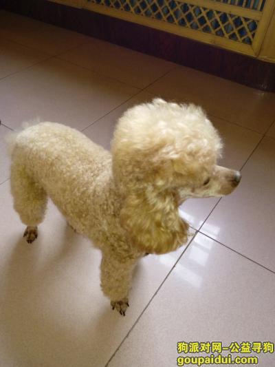 三门峡寻狗启示,【迪克】大家都很希望你平安,它是一只非常可爱的宠物狗狗,希望它早日回家,不要变成流浪狗。