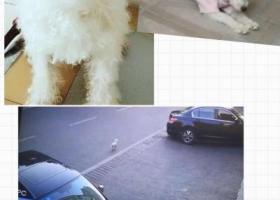 寻狗启示,寻狗启示,家里人很着急。希望各位帮帮忙,,它是一只非常可爱的宠物狗狗,希望它早日回家,不要变成流浪狗。
