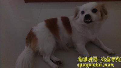 河源寻狗启示,寻狗启示…………酬谢,它是一只非常可爱的宠物狗狗,希望它早日回家,不要变成流浪狗。