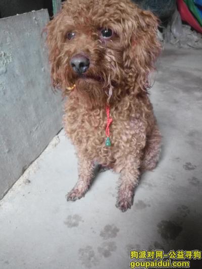 广安找狗,我家的狗狗10月26号上午走丢了,它是一只非常可爱的宠物狗狗,希望它早日回家,不要变成流浪狗。