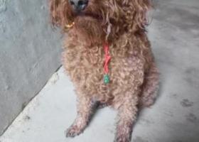 寻狗启示,我家的狗狗10月26号上午走丢了,它是一只非常可爱的宠物狗狗,希望它早日回家,不要变成流浪狗。