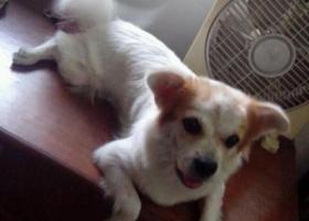 寻狗启示,狗狗已找到,它是一只非常可爱的宠物狗狗,希望它早日回家,不要变成流浪狗。