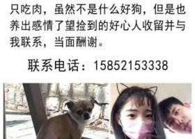 寻狗启示,徐州中枢街附近东升包子铺,它是一只非常可爱的宠物狗狗,希望它早日回家,不要变成流浪狗。