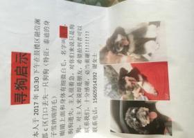 寻狗启示,寻狗,名叫薯条,丢失在福州融信澜郡附近,它是一只非常可爱的宠物狗狗,希望它早日回家,不要变成流浪狗。