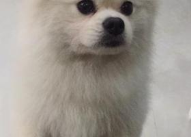 寻狗启示,温州市新桥狗狗走丢了,它是一只非常可爱的宠物狗狗,希望它早日回家,不要变成流浪狗。