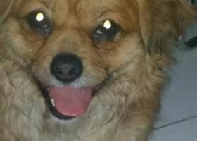 寻狗启示,拜托各位同城的朋友们 帮我找找,它是一只非常可爱的宠物狗狗,希望它早日回家,不要变成流浪狗。