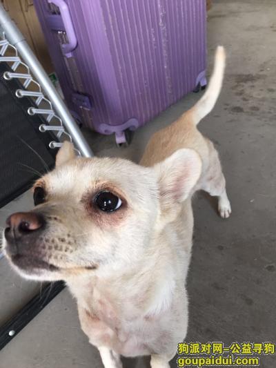 宣城寻狗网,万分着急寻找小型土狗,它是一只非常可爱的宠物狗狗,希望它早日回家,不要变成流浪狗。