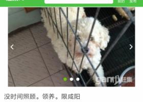 寻狗启示,急急急!找被骗卖掉的狗狗!,它是一只非常可爱的宠物狗狗,希望它早日回家,不要变成流浪狗。
