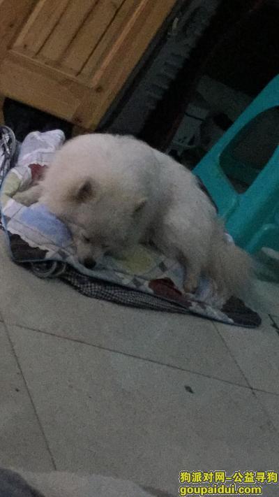 安顺寻狗网,贵州省安顺市新平坝线路车间捡银狐犬一只,如爱犬主人发现请尽快回帖,它是一只非常可爱的宠物狗狗,希望它早日回家,不要变成流浪狗。