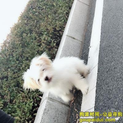 ,今天下午一点半在一点四十之间在延吉市荣军医院对面丢一条狗狗   希望大家帮忙 现在外面下雨  如果您发现狗狗 麻烦给我打个电话  我会万分感谢的  我现在很着急  请大家帮帮忙  谢谢 15943336529。 18626974763,它是一只非常可爱的宠物狗狗,希望它早日回家,不要变成流浪狗。