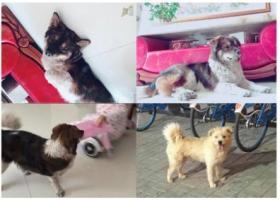 寻狗启示,山西大同重金寻狗2000元,它是一只非常可爱的宠物狗狗,希望它早日回家,不要变成流浪狗。