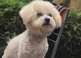 寻狗启示,无锡市梅村镇香梅花园二期寻狗启示,它是一只非常可爱的宠物狗狗,希望它早日回家,不要变成流浪狗。