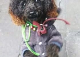 寻狗启示,17.11.09在老虎桥菜场,它是一只非常可爱的宠物狗狗,希望它早日回家,不要变成流浪狗。