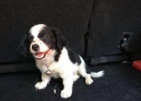寻狗启示,11月7日晚上9:30在浙江宁波史家巷小区丢失一条7个月大小狗,它是一只非常可爱的宠物狗狗,希望它早日回家,不要变成流浪狗。