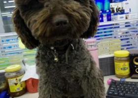2000元重酬找我心爱的狗狗!