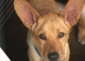 寻找生病的大耳朵狗狗