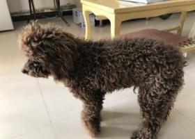 寻狗启示,寻找狗主人狗狗想回家,它是一只非常可爱的宠物狗狗,希望它早日回家,不要变成流浪狗。