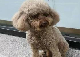 郑州市二七区寻找狗狗